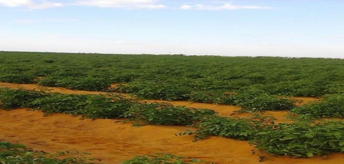🔴 بالصور.. صاحب مزرعة: غلاء الطماطم مُستمر حتى ديسمبر.. والكيلو عندنا بـ 7 جنيهات 📷