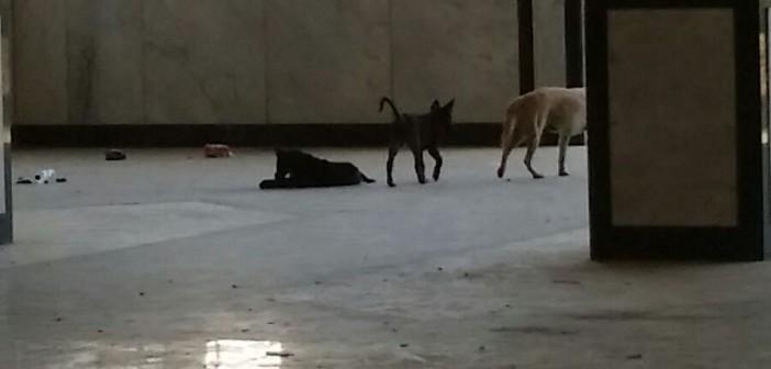 بالصور.. كلاب تتجول في مباني جامعة أسيوط 📷