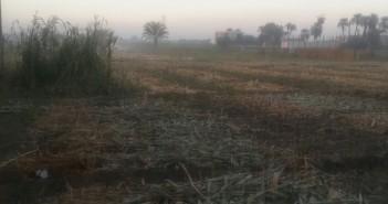 مواطنون يشكون من دخان حرق بوص الذرة في سوهاج