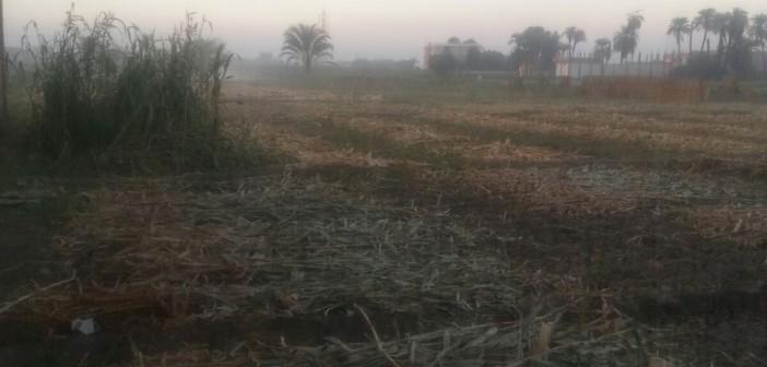 📷 مواطنون يشكون من دخان حرق بوص الذرة في سوهاج