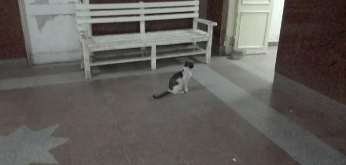 📷 انتشار القطط في طرقات مستشفى الحوامدية بالجيزة