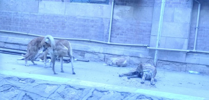 بالصور.. كلاب في «آداب» جامعة أسيوط تنشر الفزع بين الطلاب 📷