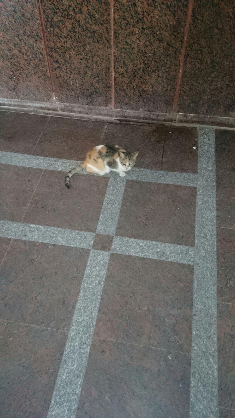 بالصور.. قطط تلهو في طرقات مستشفى مطوبس.. ودماء على الأرض
