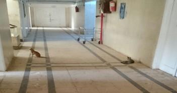 بالصور.. قطط تلهو في طرقات مستشفى مطوبس بكفر الشيخ
