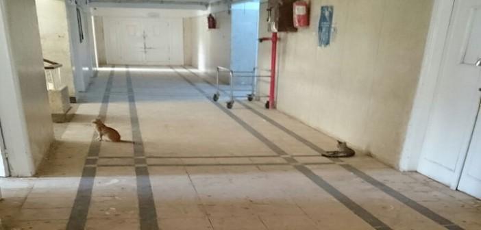 بالصور.. قطط تلهو في طرقات مستشفى مطوبس بكفر  الشيخ 📷