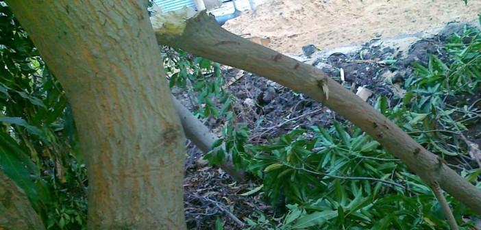 تدمير حديقة في حي شرق المنصورة خلال ترميم الصرف الصحي 📷