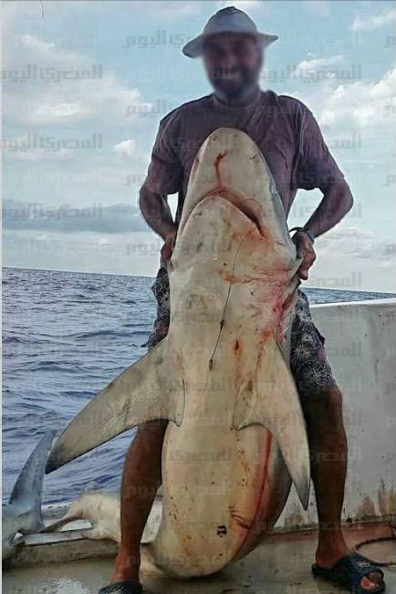 ظهور أسماك القرش قرب شواطىء الإسكندرية.. وصياد: أمسكت بواحدة طولها 3 أمتار