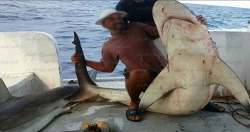 ظهور أسماك القرش قرب شواطىء الإسكندرية.. وصياد: إحداها طولها 3 أمتار
