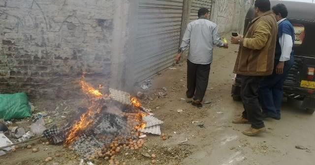 حرق «البيض» الفاسد في حملة صحية لمدينة الجمالية