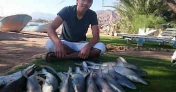 صيد صغار أسماك القرش في دهب بجنوب سيناء
