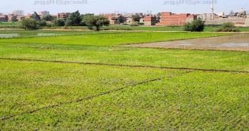 أراضي زراعية ـ أرشيفية