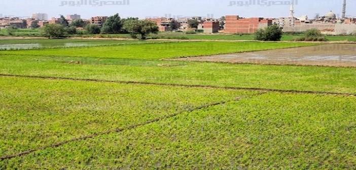 بالصور.. فلاحون: غرق 500 فدان على فرع رشيد في الأمطار.. وعدم صلاحية زراعتها لسنوات 📷