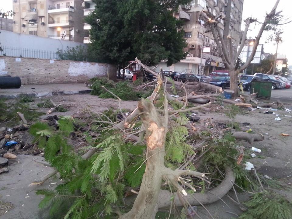 مذبحة لأشجار عمرها 50 عامًا أمام مستشفى هليوبوليس