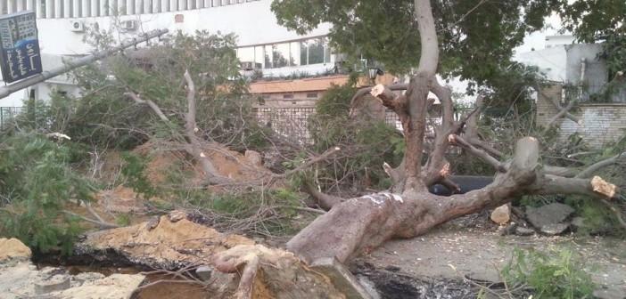 بالصور.. مذبحة أشجار عمرها 50 عامًا في هليوبوليس لإصلاح الصرف الصحي