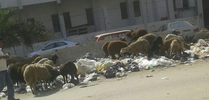 📷| انتشار القمامة ورعي الأغنام أمام سنترال بولاق الدكرور الرئيسي