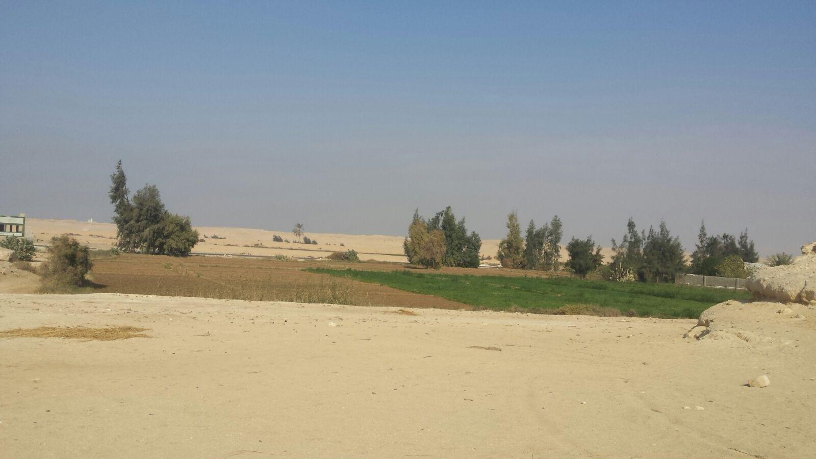 «الري» تقرر قطع المياه عن 150 فدانا مُستصلحًا في المنيا