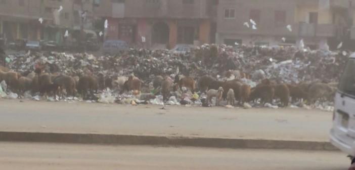 بالصور.. مواطنون يشكون من تراكم جبال القمامة بالمرج