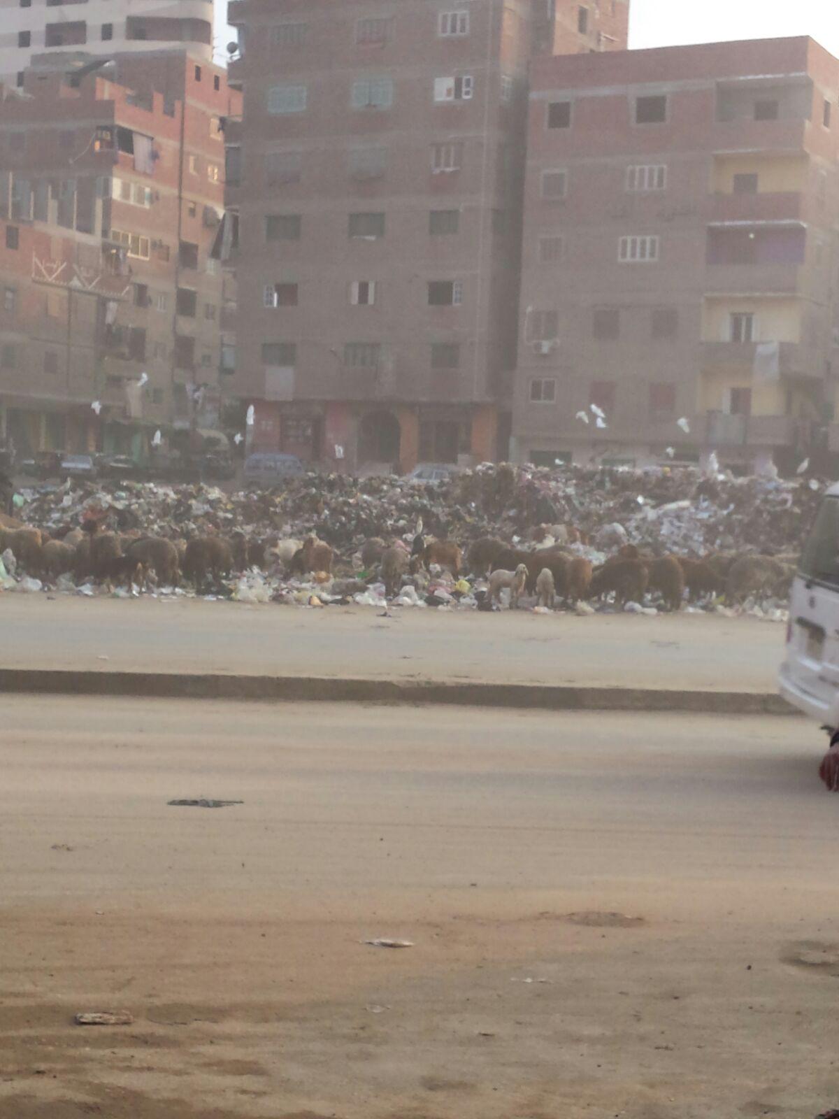 مواطنون يشكون تراكم جبال القمامة بمحطة الشرفاء في المرج
