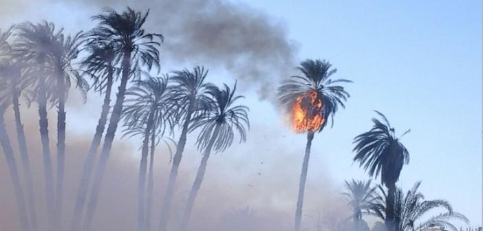 🔥 بالصور.. حريق هائل يلتهم النخيل بالأقصر.. ومحاولات للسيطرة عليه