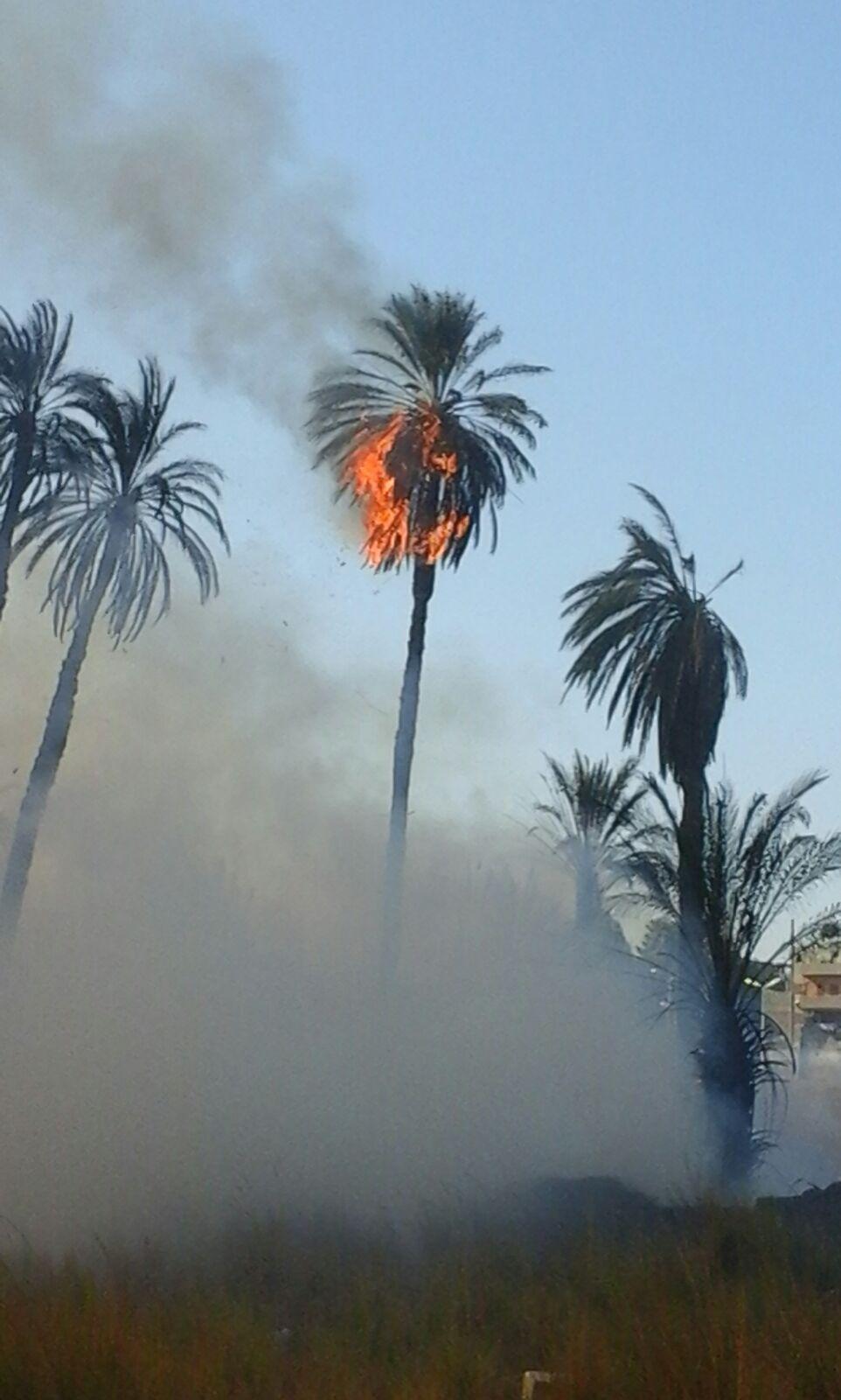 حريق هائل يلتهم النخيل بالأقصر وسط محاولات للسيطرة عليه