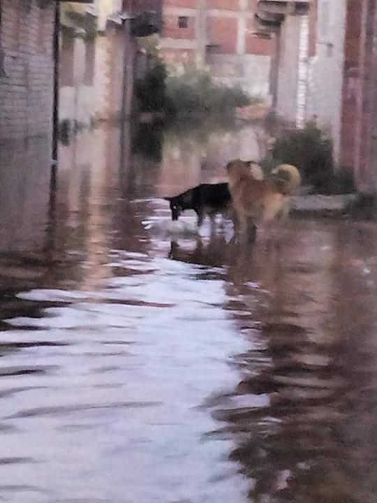 غرق «أبو تلات» بالإسكندرية في الأمطار.. والمياه تخترق البيوت