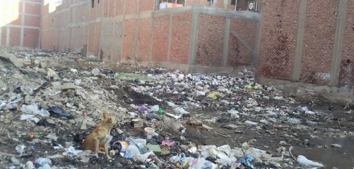 أهالي «المتربة» بالجيزة يطالبون برفع القمامة المتراكمة في الشوارع