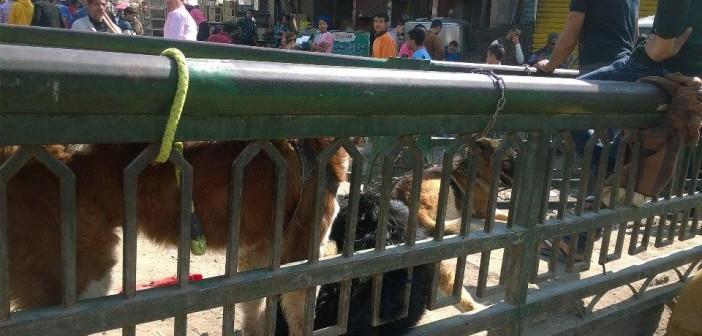 📷| سوق السيدة عائشة للكلاب قنبلة موقوتة في غيبة الأمن والمرور