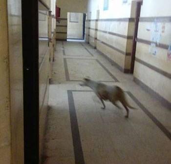 بالصورة.. كلب يتجول في مستشفى المحمودية بالبحيرة