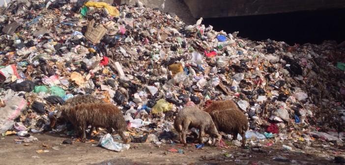 بالصور.. تراكم أكوام القمامة أسفل كوبري «الدائري» بالوراق