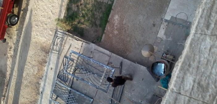 الورش وتعديات المساحات الخضراء تُغضب سكان التجمع الأول بالقاهرة الجديدة