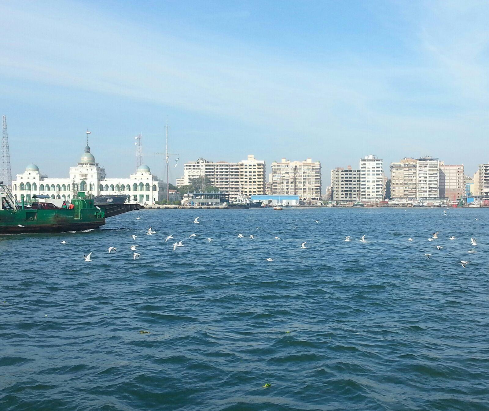 في بورسعيد.. ركاب المعدية اعتادوا إلقاء بقايا الخبز لإطعام طيور النورس