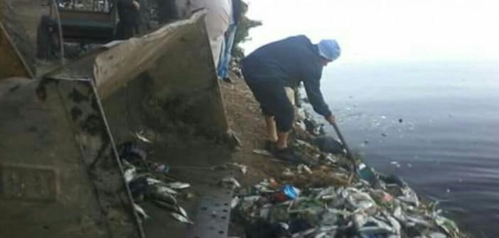 📷| استجابة لشكاوى المواطنين.. حملة لرفع الأسماك النافقة بالمحمودية