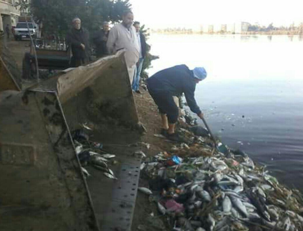بالصور.. حملة لرفع الأسماك النافقة بالمحمودية بعد تعدد شكاوى المواطنين