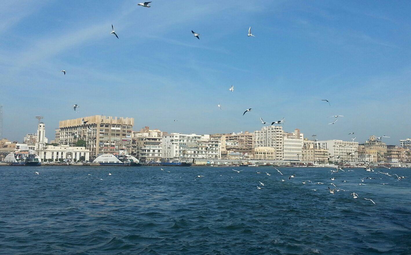 بالصور.. في بورسعيد.. ركاب المعدية اعتادوا إلقاء بقايا الخبز لإطعام طيور النورس