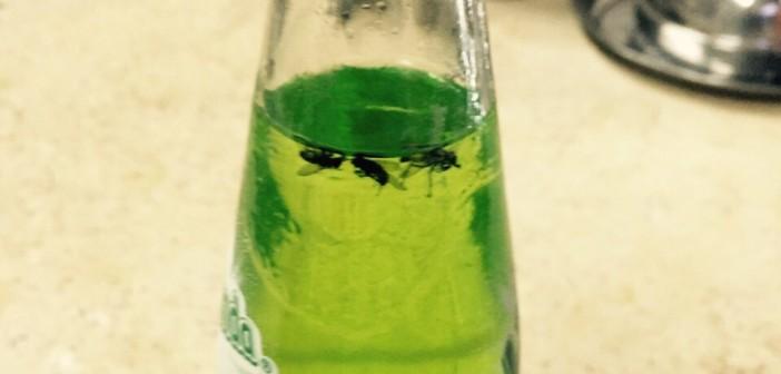 📷| محضر ضد شركة مشروبات غازية لوجود «ذباب» في عبوة