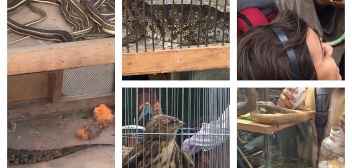 سوق السيدة عائشة..حيوانات «محظورة ومهددة بالانقراض» للبيع.. وتجاهل حكومي (صور)