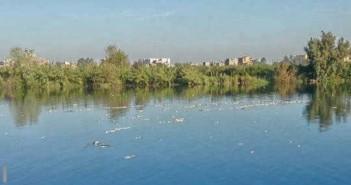 نفوق مواشي وأسماك في قرى المحمودية والرحمانية بالبحيرة