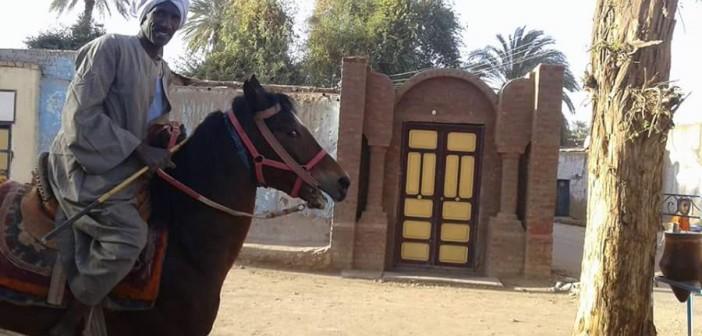 📷| أسوان تحتضن سباقا للخيول العربية يومي الجمعة والسبت