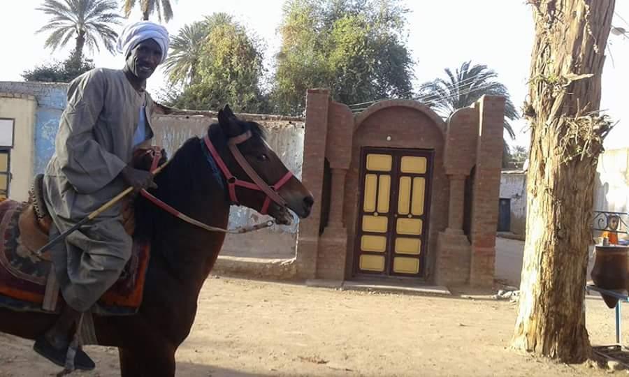 أسوان تحتضن سباق الخيول العربية يومي الجمعة والسبت