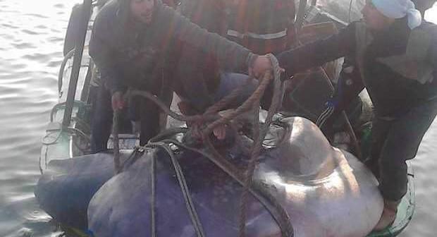 بالصور.. صياد وأولاده من رشيد يصيدون سمكة «شمس المحيط» النادرة