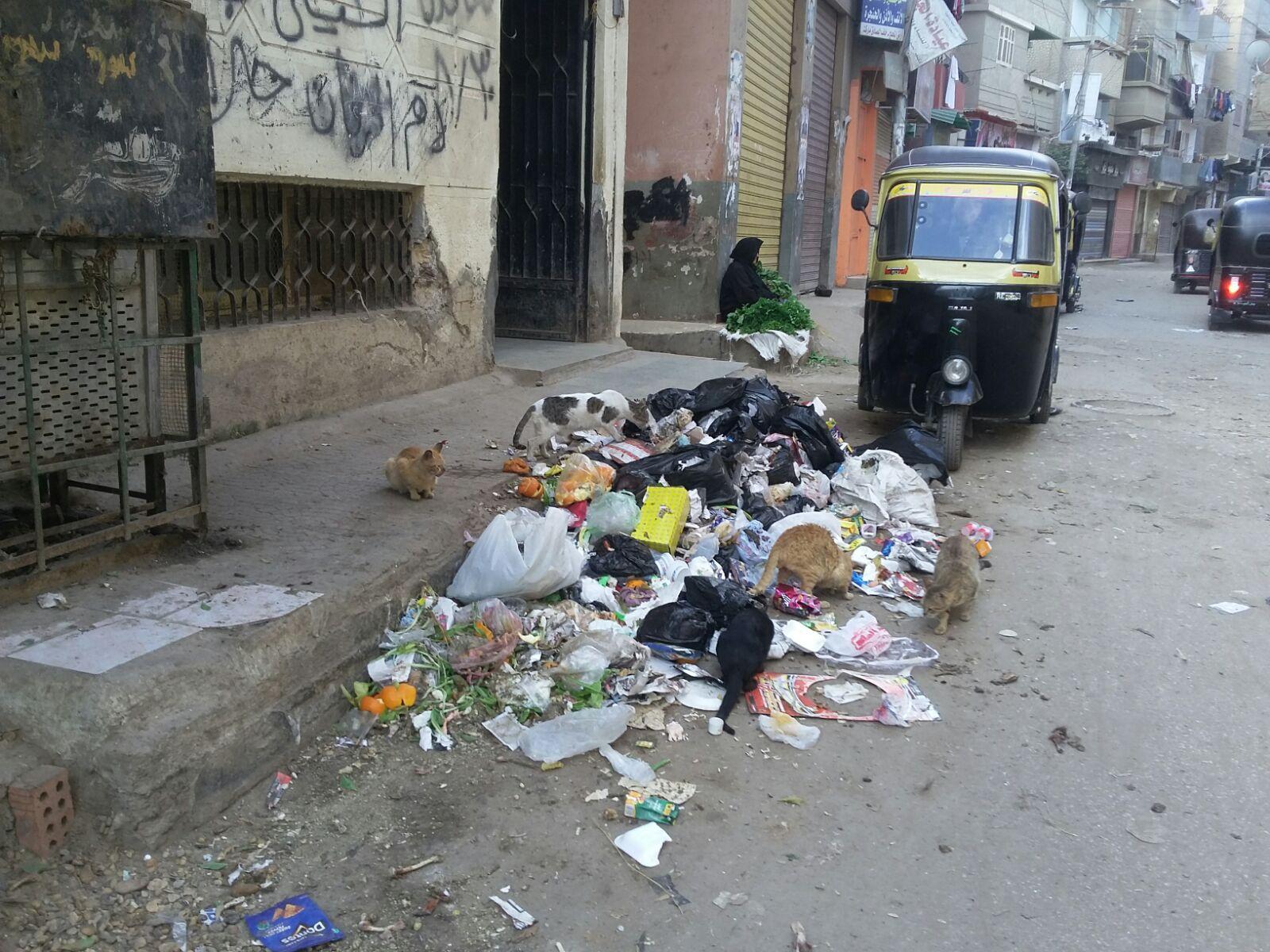 بالصور.. تجمعات للقمامة أمام مكتب صحة السنبلاوين بالدقهلية