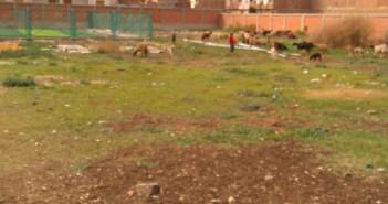 مواطن يرصد مشاهد الإهمال في مركز شباب بطنطا