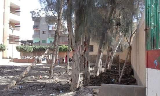 مواطن يشكو من أشجار كبيرة تهدد حياة طلاب مدرسة كوم الدربي بالمنصورة