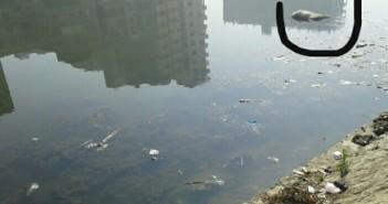 قمامة وحيوانات ميتة تملأ بحر شبين الكوم