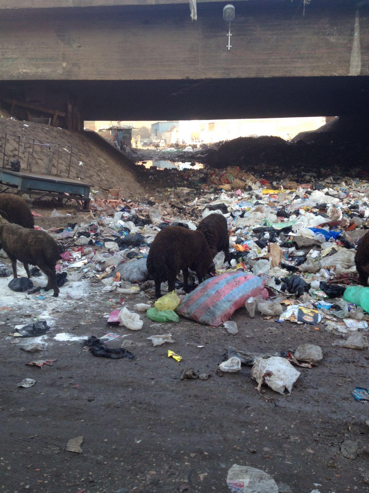 القمامة تسد طريق المرور أسفل دائري الوراق.. وطفح المجاري