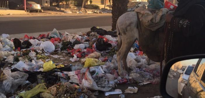 📷| انتشار القمامة في شوارع الحي العاشر بمدينة نصر