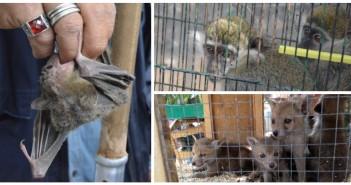بالصور.. سوق السيدة عاشة للحيوانات البرية.. هنا سبب ظهور التماسيح في مصر