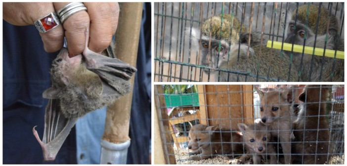 بالصور.. سوق السيدة عاشة للحيوانات البرية «المحظورة».. من هنا ظهرت التماسيح