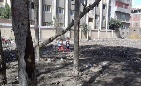 📷| مواطن: أشجار كبيرة تهدد حياة طلاب مدرسة كوم الدربي بالمنصورة