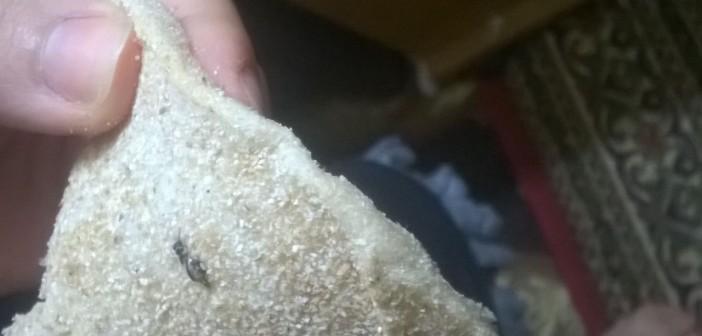 مواطن يعثر على «صرصار» في رغيف خبز بالقليوبية (صورة)